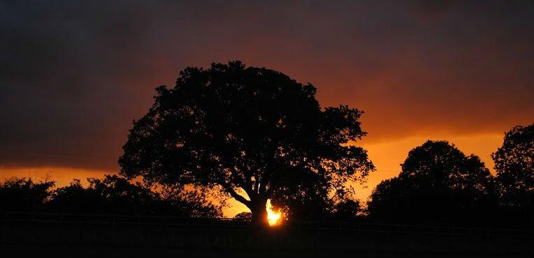 Sunset Baconsthorpe Meadows