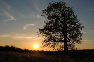 Sunset at Baconsthorpe Meadows by Emily Cushing